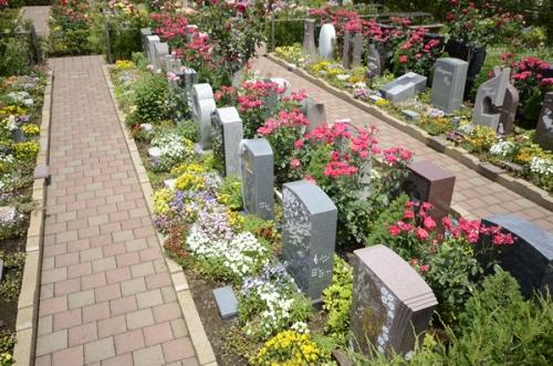 墓石と墓石の間にはバラの生垣がございます。