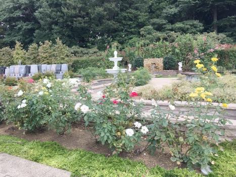手入れの行き届いたバラの庭園は休憩室からも見渡せます。