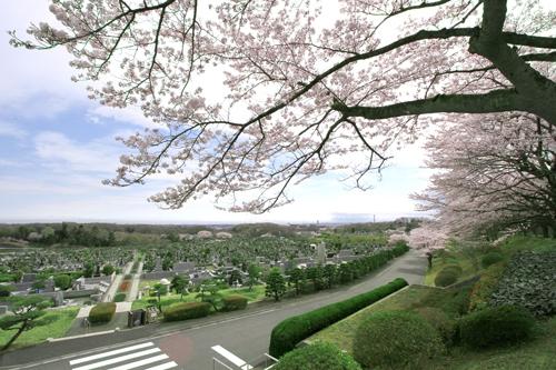 東京霊園は都心から好アクセスの自然豊かな公園墓地です。