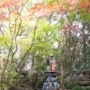 庭園内にはお二人の幸せな表情だけでなく、和装の美しさをさらに引き立たせる自然溢れるロケーションスポットが満載。四季折々に変化する樹木たちの下で、艶やかに彩ります。
