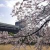 新しい1年がスタートする春。庭園内にも沢山の桜が咲き誇ります。四季感溢れる景色の中での最高の1枚をお撮りします。