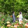 ザ・プリンス パークタワー東京は芝公園の自然に囲まれたホテル。春と秋には約50品種700株のバラが咲きほこります。