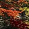 庭園が色づく秋は、美しい紅葉をバックに撮影していただけます。